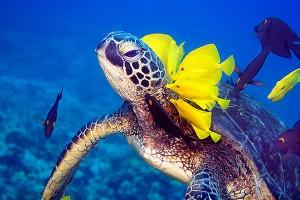 Underwater_sea_life_20